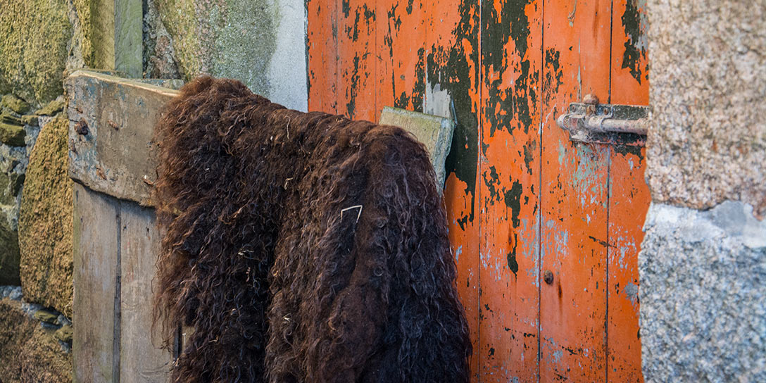 ardalnish-fleece-and-shed